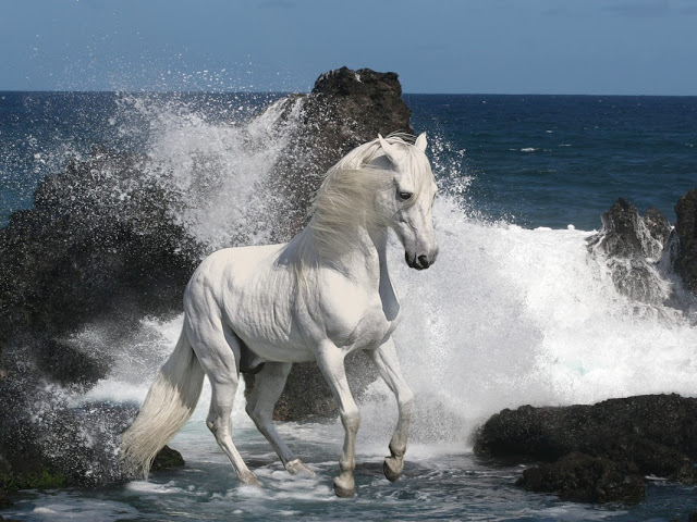 Mustang_11