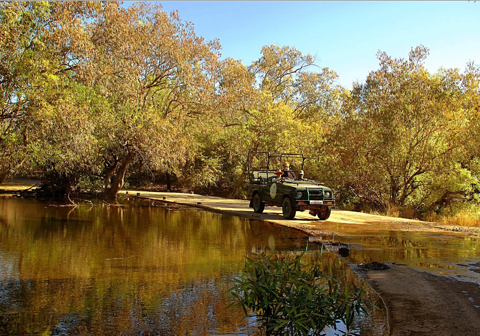 Safaris @ Gir National Park-1