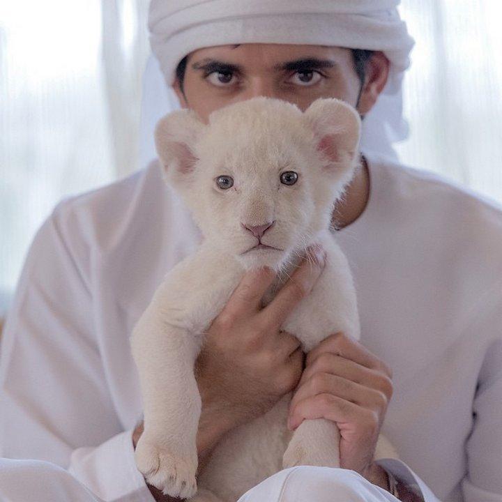 """Арабският шейх Хамдан още от раждането си живее в невероятен разкош, но го обичат, защото е """"близък до народа"""".  На снимката е с домашния си любимец - тигърче. © facebook.com."""