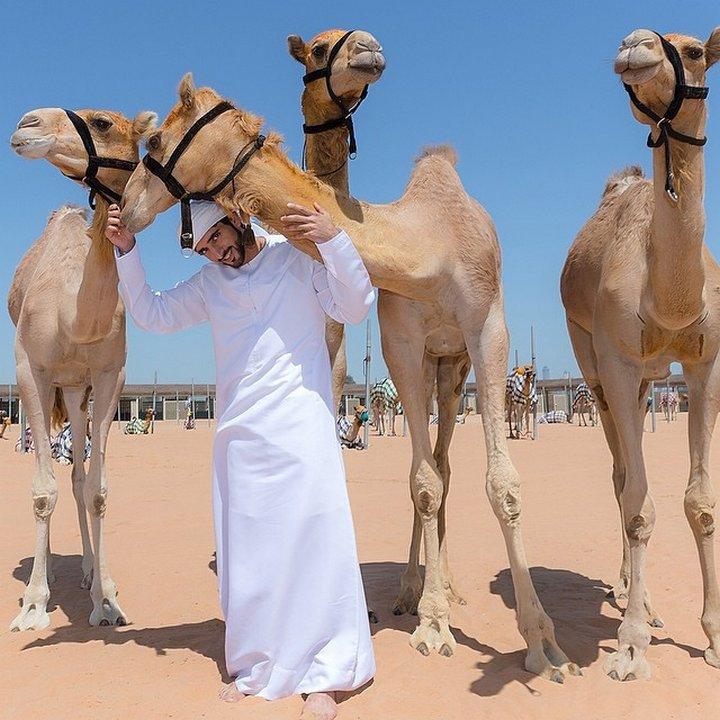 Негово височество се увлича и от отглеждане на камили, за които не жали средства.