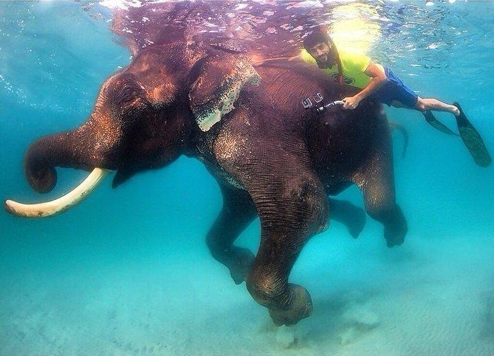 Подводно плаване с единствения в света плаващ слон.