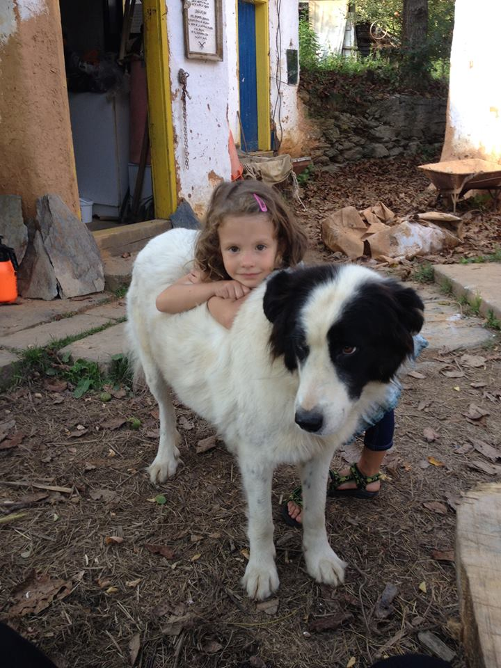 Невена, дъщерята на Филип, с кучето Дара и със зайче пред къщата в Желен.