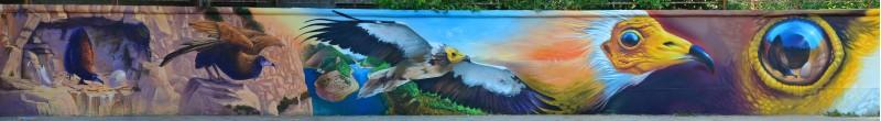 Проект Live Neofron на оградата на основно училище в Хасково, посветен на опазването на египетския лешояд, най-древната птица, която се среща в местност близо до с. Маджарово.
