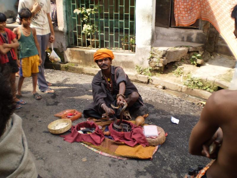 Танцуваща кобра в Калкута.