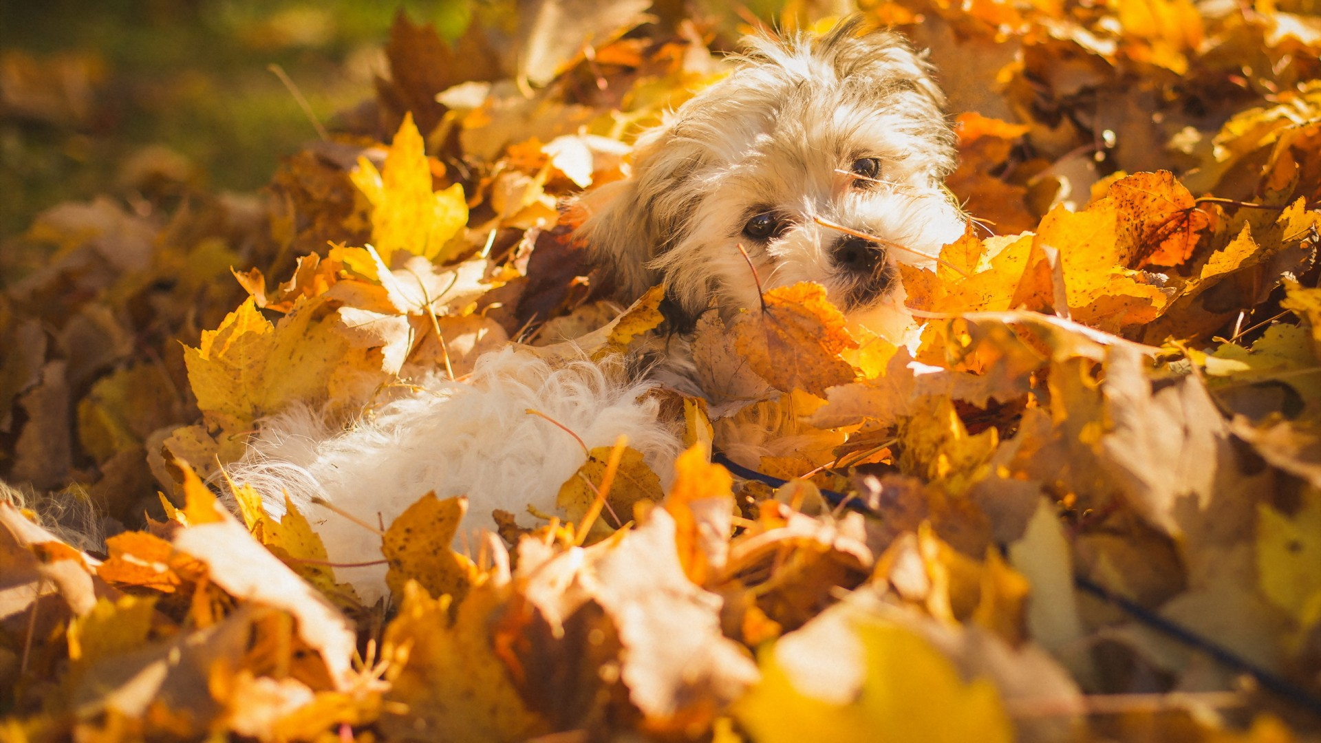 Само кучетата ли обичат да се въргалят в шумата?